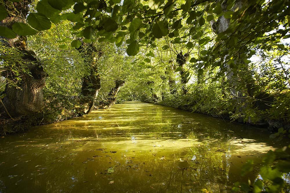 Le marais Poitevin - canaux