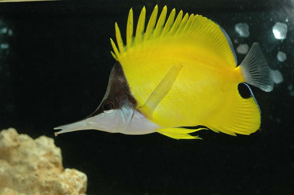 Talmont St Hilaire -  Aquarium le 7 ème continent